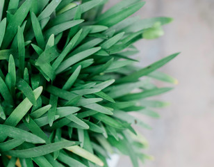 close up of a green textured outdoor plant