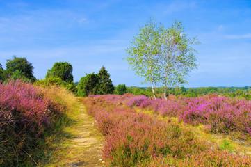 Lüneburger Heide im Herbst bei Wilsede - landscape Lueneburg Heath in autumn