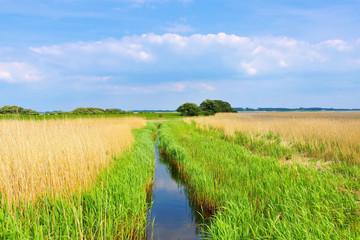 Ummanz Landschaft mit Schilf  -  island Ummanz landscape with reed