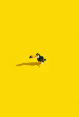Playing Blocks Bird / Toucan