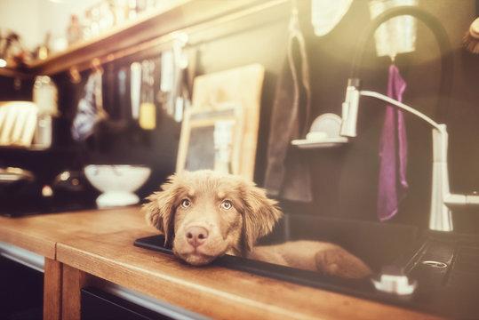 Hund in Küchenspüle