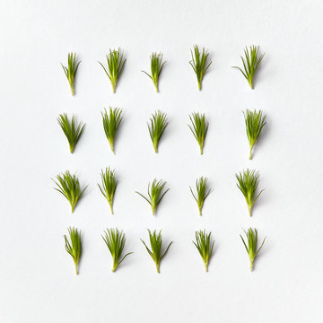 Natural square pattern of green pine needles twigs on a light gray background, place for text. Top view.