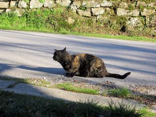 Gatto nero a strisce al sole su una strada