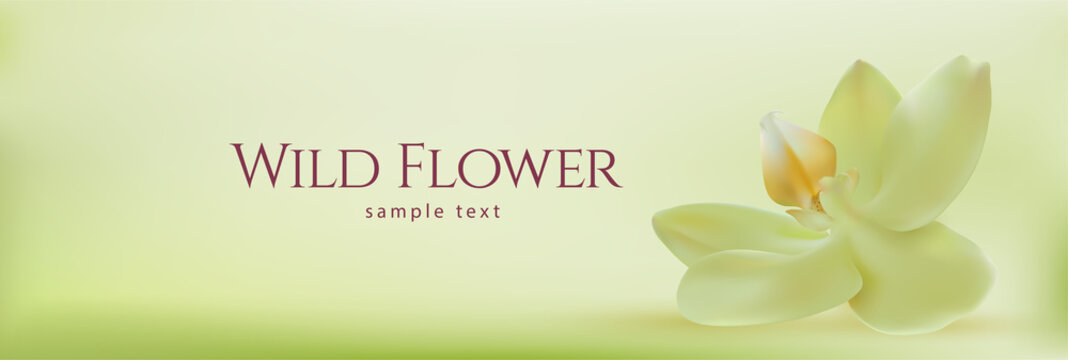 Realistic spa orchid. Horizontal panoramic background with paradise flower. Vector illustration.