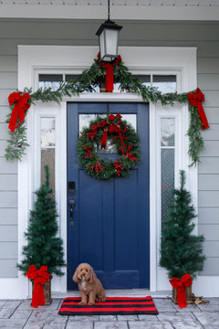 Navy blue front door of contemporary new construction siding gray home decorated for Christmas holidays with wreath trees and garland and a cute shaggy dog