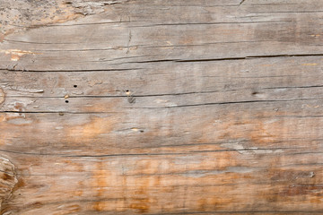 Wall Murals Wood Natural horizontal background with tree texture