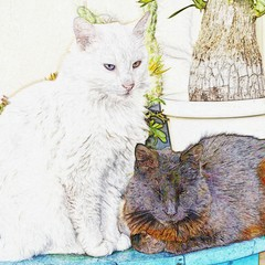 Close up of the cats Yin Joey and Yang Snowy