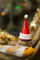子猫 クリスマス