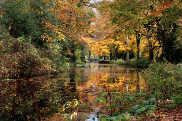Autumn colours reflected in the still water of the Basingstoke canal with a lock and bridge in the distance, located near Woking, Surrey