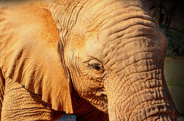 Beautiful Images of of African Elephants. Wild african elephant close up, Namibia, Africa
