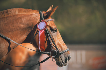 Portrait of a beautiful sorrel racehorse with a trimmed mane, who won the competition and received...