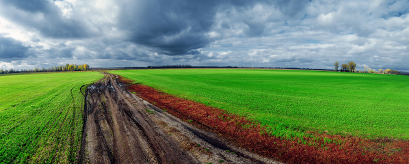 Dirt road in the middle of the field after the rain.