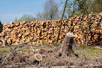 geschlagene Holzstämme im Harz.