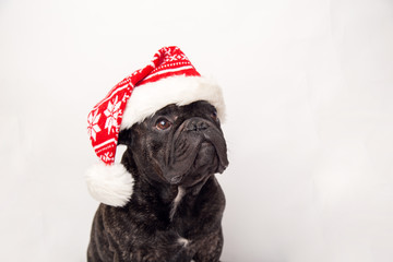 Fototapeten Französisch bulldog french bulldog dog with red christmas santa claus hat for xmas holidays. isolated on white background. copy space.