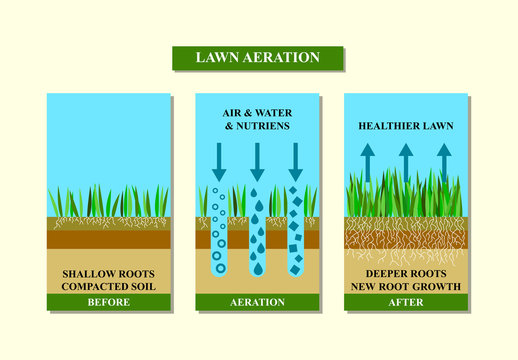 Lawn aeration before and after, vector illustration.
