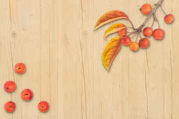 Autumn composition leaves fruits and branch of malus floribunda on light wood background top view flat lay copyspace