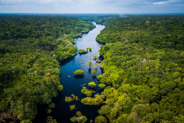 Amazon Rainforest in Anavilhanas National Park, Amazonas - Brazil