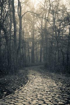 alter Weg in den Wald