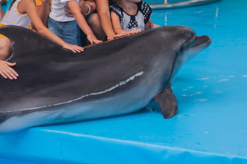 Trained dolphin in the aquarium, dolphinariums. show with dolphins. the trainer works with a trained dolphin.