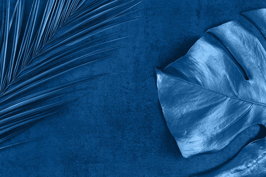 Closeup of trendy classic blue colored monstera and palm leaf on blue background. Tropical luxury minimal summer background. Flat lay. Copy space. 2020 color of the year