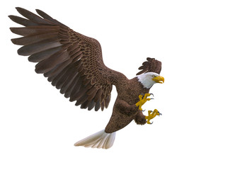 Fototapete - bald eagle attacking on white background