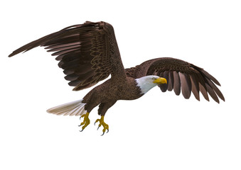 Fototapete - bald eagle flying on white background