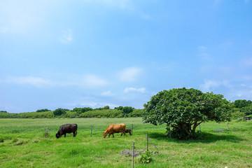 黒島の風景
