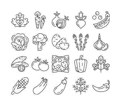 Natural vegetables black line icons set. Healthy, organic food concept. Cooking ingredients collection. Pictograms for web page, mobile app, promo. UI UX GUI design elements. Editable stroke.