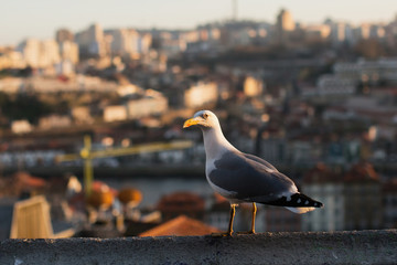 Seagull sits against the backdrop of a blurred old port city.