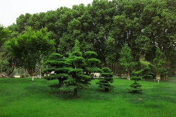 Ingelijste posters Groene green landscape in the park