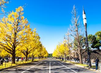 東京 行幸通りの銀杏並木