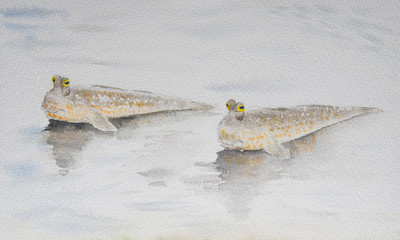 Watercolor painting of two mud skippers