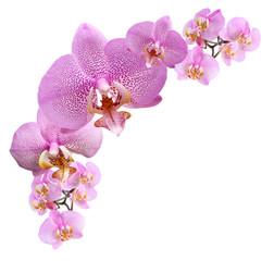Tuinposter Orchidee Purple Orchid Vignette