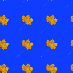 Seamless pattern with autumn yellow leaves on blue color