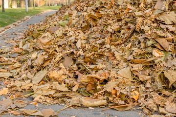 Heap of fallen dry colorful leaves swept on the road in a park