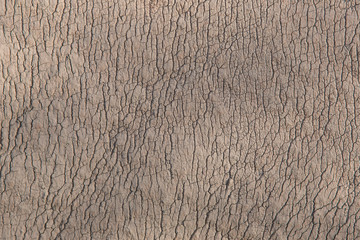 Rhino wrinkled skin looking like picture of cracked dried soil taken from high height. Beautiful natural texture for abstract wallpaper.