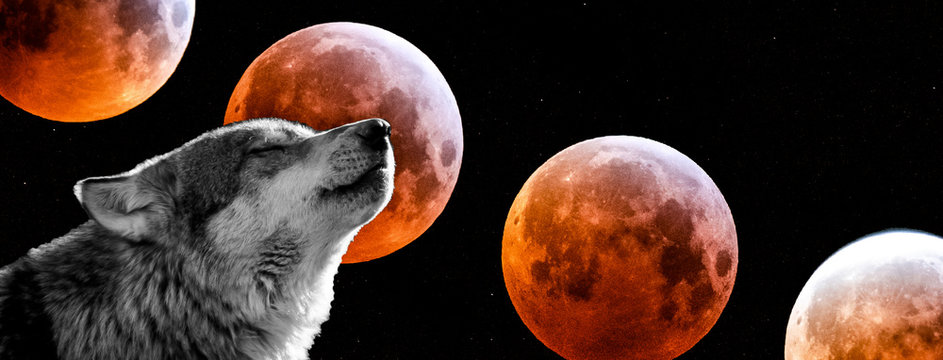 Wolf with a bloodmoon in background
