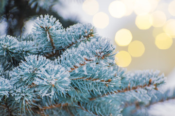 Printed kitchen splashbacks Light blue Winter background with branches of spruce and christmas lights and bokeh