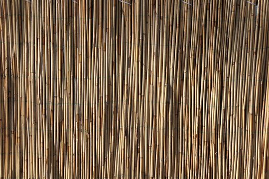 Thin bamboo is tied with green thread.