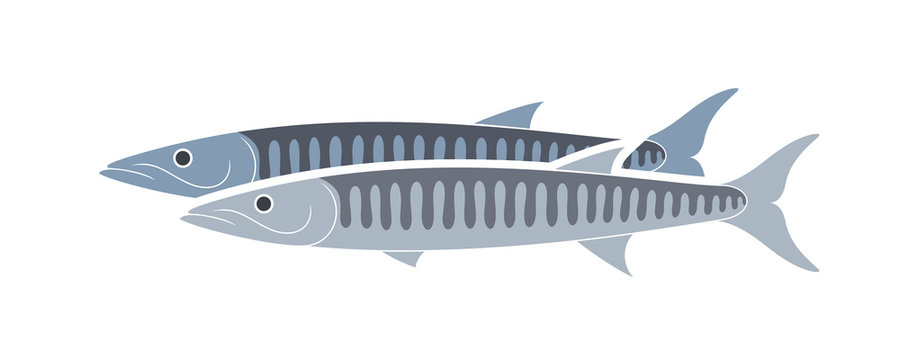 Barracuda logo. Isolated barracuda on white background