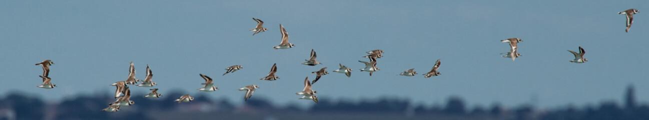 Foto auf Acrylglas Vogel oiseau d'eau divers
