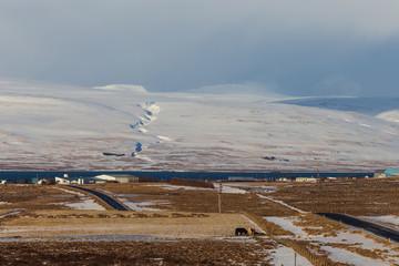 Iceland horses and icelandic landscape, winter in Iceland, sunny day in winter, icelandic horses