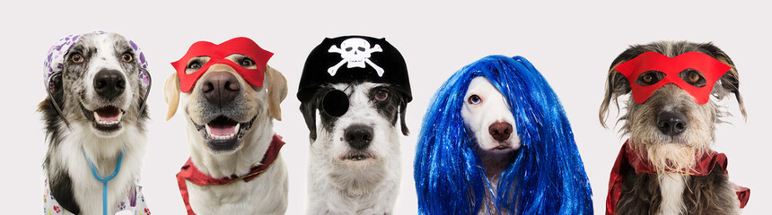 Fotorolgordijn Carnaval Banner five dogs celebrating carnival, halloween, new year wearing pirate hat, blue wig, red mask, cape and doctor costume. Isolated on white background..