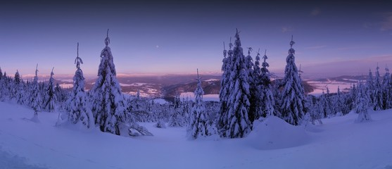 Scenic winter landscape,snowy spruce trees,fresh powder snow, mountain forest. Valley, mountains and blue sky with moon in background. Panoramic image. Middle europe.  .