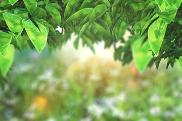 In de dag Olijf 3D leaves on a defocussed sunny landscape