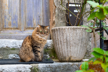 A beautiful long haired tabby sits on the stone doorstep of a home in the medieval village of Gourdon, France