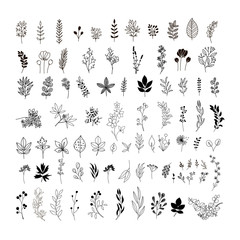 Handdrawn leaves and flowers. Floral clipart. Leaf sketches. Botanical collection