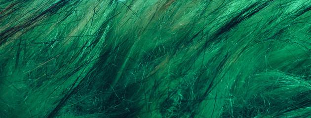 Close up Aqua Menthe Beautiful Fur background texture.
