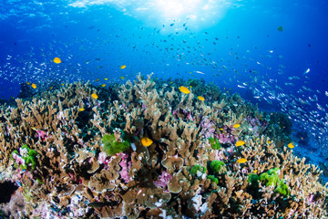 Keuken foto achterwand Koraalriffen Beautiful, coloful tropical coral reef at sunrise (Similan Islands, Thailand)