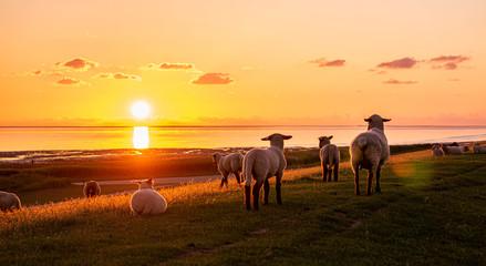 Fotobehang Schapen Abendrot Sonnenuntergang an der Nordsee